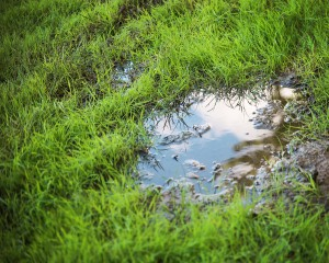 grassy yard lawn or park with puddles in the green field