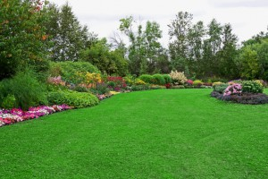 Green Lawn in Landscaped Formal Garden